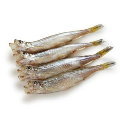 supplier ikan shisamo